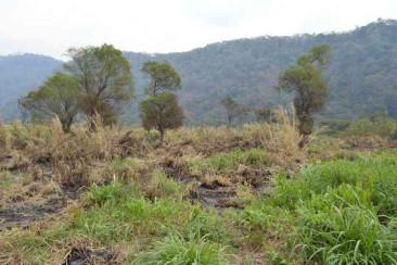 Venta y renta de terreno independiente Palín