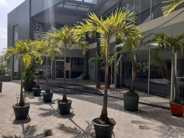 Oficina en alquiler en Colonia San Benito -Zona Rosa