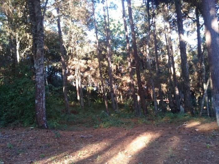 Terreno en Venta en Granjas Praderas del Bambú 2