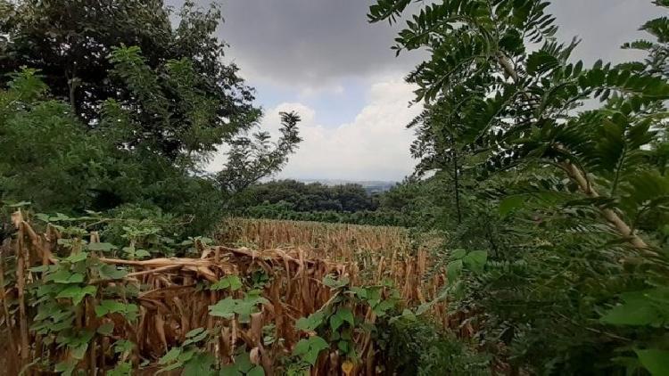 Terreno plano en Venta